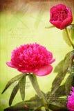 Les beaux fleurs et dragon de pivoine pilotent des motifs avec des citations photographie stock libre de droits