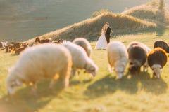 Les beaux ménages mariés s'approchent du troupeau de moutons sur le beau pré de montagne Images libres de droits