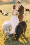 Les beaux ménages mariés s'approchent du troupeau de moutons sur le beau pré de montagne Photo stock