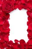 Les beaux pétales des roses rouges et se sont levés Images libres de droits