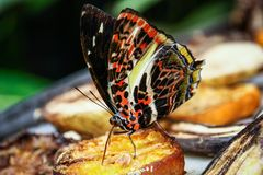 Les beaux papillons de Tun Abdul Razak Heritage Park, Kuala Lumpur, Malaisie photographie stock