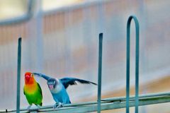 Les beaux perroquets lumineux reposent haut sur l'antenne images libres de droits