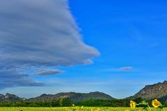 Les beaux tournesols colorent le gisement de fleur en Thaïlande Asie Colline b Photo libre de droits