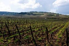 Les beaux vignobles à Beaune Cote de Beaune où le vin est Photos stock