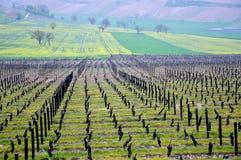 Les beaux vignobles dans le sancerre où du vin est produit, franc photos libres de droits