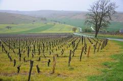 Les beaux vignobles dans le sancerre où du vin est produit, franc Photo libre de droits