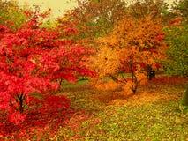 Les belles couleurs d'automne dans la région boisée marche en parc photo stock