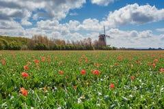 Les belles et colorées tulipes néerlandaises met en place avec du typique Photos stock