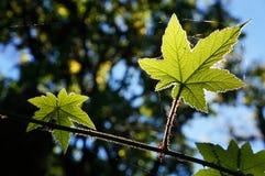 Les belles feuilles dans la forêt avec le soleil s'allument du postérieur Photo libre de droits