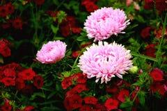 Les belles fleurs Images libres de droits