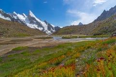 Les belles fleurs chez Khuspang campent, le voyage K2 Photos libres de droits