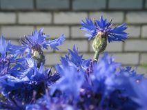 Les belles fleurs d'été rendent des observateurs heureux un jour ensoleillé photo stock