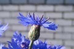 Les belles fleurs d'été rendent des observateurs heureux un jour ensoleillé photographie stock libre de droits