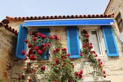 Les belles fleurs de ressort sont blossomingon la maison bleue image libre de droits