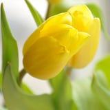 Les belles fleurs de source Images stock