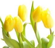 Les belles fleurs de source Photographie stock