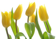 Les belles fleurs de source Images libres de droits