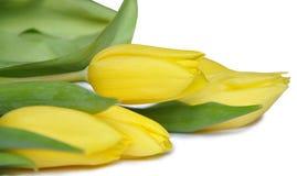 Les belles fleurs de source Photos stock