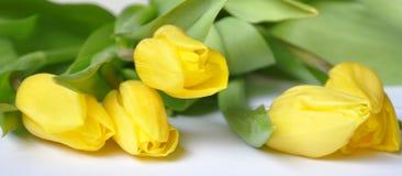 Les belles fleurs de source Photo stock