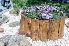 Les belles fleurs lilas se développent sur le tronçon Photo stock