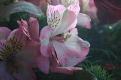 Les belles fleurs ont tiré pendant le matin dans le jardin image stock