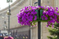 Les belles fleurs pourpres dans le pot de fleur sur le réverbère signalent le poteau dans la ville Photo libre de droits