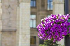 Les belles fleurs pourpres dans le pot de fleur sur le réverbère signalent le poteau dans la ville Photographie stock