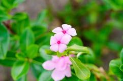 Les belles fleurs s'approchent Image libre de droits