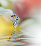 Les belles fleurs se sont reflétées dans l'eau, concept de station thermale Photographie abstraite tranquille d'art de plan rappr Photo libre de droits