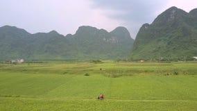 Les belles montagnes vertes se lèvent au-dessus du gisement illimité d'arachide banque de vidéos