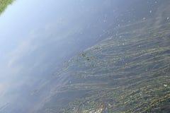 Les belles ondulations sur la rivière entrent au-dessus des pierres colorées dans le soleil d'été Images stock