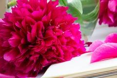 Les belles pivoines roses fleurit avec un carnet vide sur un fond en pierre gris Photos stock