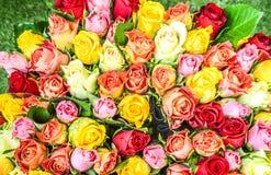 Les belles roses roses et blanches fleurit à un magasin de fleur parisien Image libre de droits