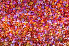 Les belles roses rouges naturelles fleurissent le fond pour des occasions spéciales Image stock
