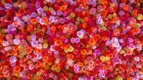 Les belles roses rouges naturelles fleurissent le fond pour la bannière d'occasions spéciales image libre de droits