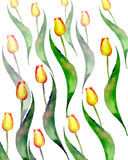 Les belles tulipes de jaune de ressort modèlent le croquis de main d'aquarelle Photos libres de droits