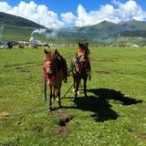 Les bergers du cheval Photographie stock libre de droits