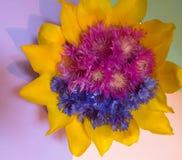 Les bleuets de composition en conception florale font du jardinage photos stock