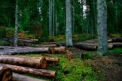 Les bois photographie stock