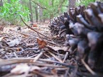 Les bois photos stock