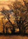 Les bois Photographie stock libre de droits