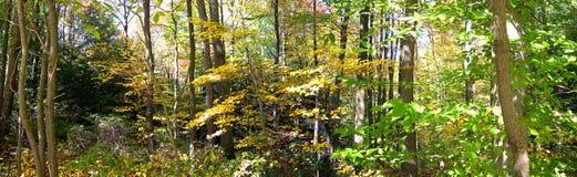 Les bois Image libre de droits
