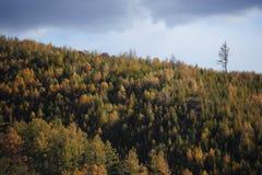 Les bois d'automne Photographie stock