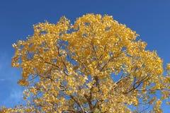 Les bois d'automne Photo stock
