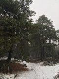 Les bois dans une tempête de neige Image libre de droits