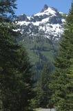 Les bois du support plus pluvieux Photographie stock libre de droits