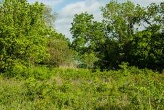 Les bois peuvent juste voir un petit étang Photographie stock