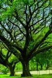 Les bois sont beaux, foncés et profondément Mais j'ai des RP Photographie stock libre de droits