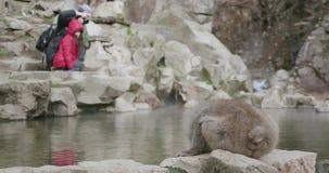 Les boissons de singe de neige de onsen, source thermale, famille prennent des photos à l'arrière-plan banque de vidéos