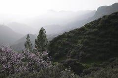 Les bords du jour dans mamie Canaria, Cruz de Tejeda Image stock